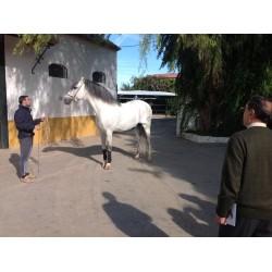 Visitas a yeguadas de caballos PRE