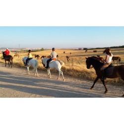 Paseo a Caballo + Visita Yeguada PRE