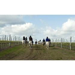 Ruta a Caballo por viñedos con Visita y Degustación Bodega Montilla - Moriles