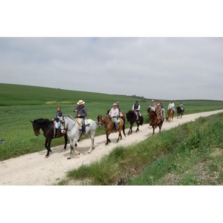 Ruta a caballo por la Campiña Cordobesa
