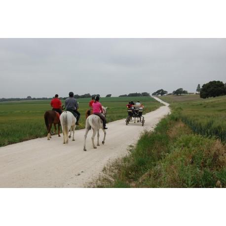 Ruta a Caballo de 2 días por la Campiña Andaluza