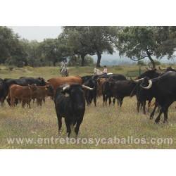 Ruta a Caballo en Ganaderia de Toros Bravos